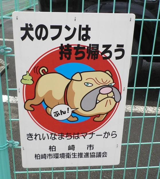 犬糞~柏崎市