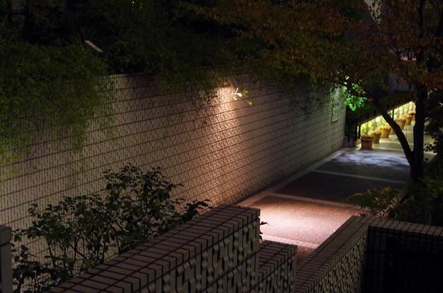 ローズガーデン前の夜