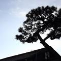 屋根から木