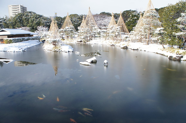 写真: 20141218白鳥庭園(5)