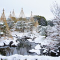写真: 20141218白鳥庭園(6)