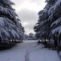 写真: 20141218鶴舞公園(2)