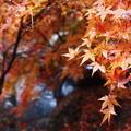 写真: 三郎の滝4
