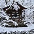 写真: 金閣寺09