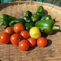 Photos: 収穫野菜7