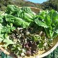 Photos: 収穫野菜11