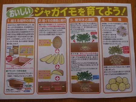 写真: ジャガイモ栽培1