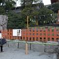Photos: 鎌倉八幡4