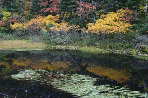 バショウ沼の紅葉