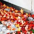 Photos: Leaves 10-18-14