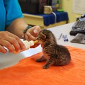 fostering a kitten 9-21-14