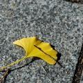 写真: Autumn Texture 11-08-14