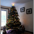 写真: Xmas Tree 2014