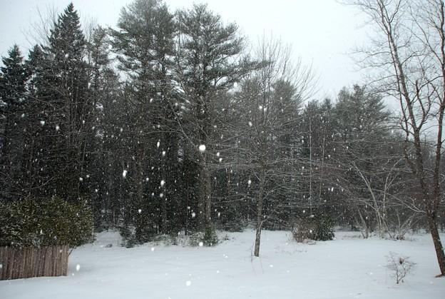 写真: Snowstorm 1-24-15