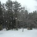 Snowstorm 1-24-15