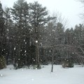 Photos: Snowstorm 1-24-15