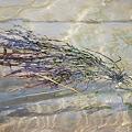 Seaweed 4-2-09