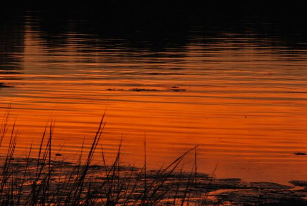 Photos: Orange Water