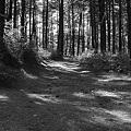写真: Pine Barren