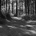 Photos: Pine Barren