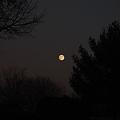 写真: A Night Before Full Moon