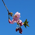 The Buds in the Sky 5-1-11