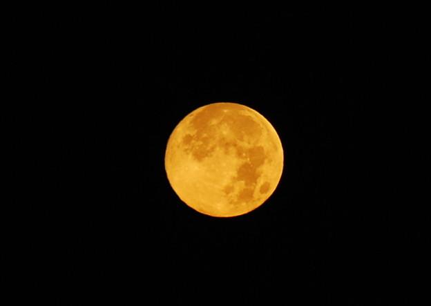 写真: The Morning Moon 8-13-11