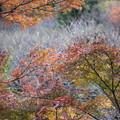 写真: 熱海梅林の紅葉