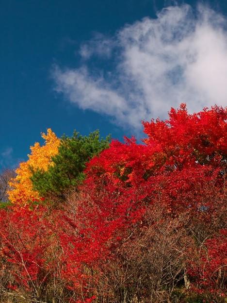 カラフル紅葉