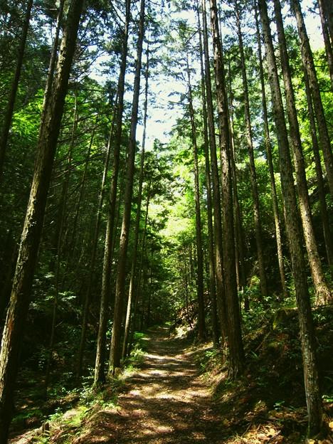乙女沢不動滝への道