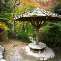 Photos: 嵐山