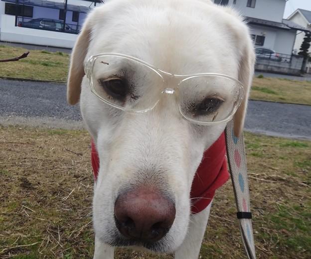 拾いものはメガネ