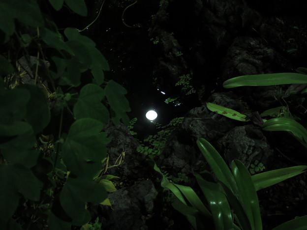 写真: 密林の月