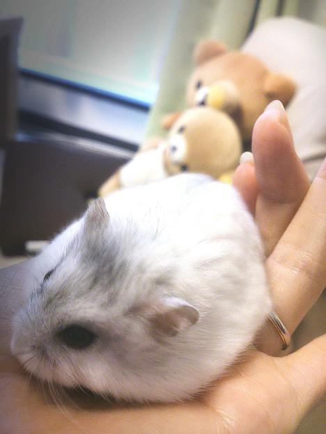 ネズミ…と、言わないで…