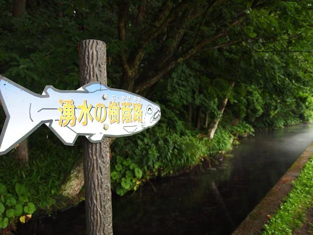 鮭の案内板