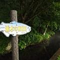 Photos: 鮭の案内板