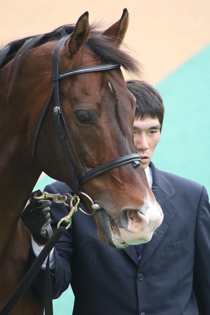 メイショウサムソン_1(14/11/02・東京競馬場)
