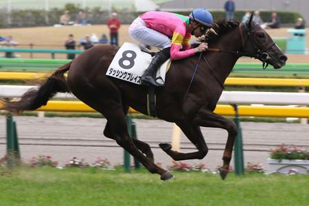 ダッシングブレイズ レース(14/11/08・新馬戦)