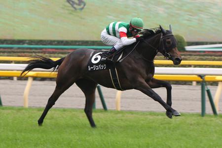 ルージュバック レース(14/11/09・百日草特別)