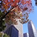 Photos: 高層ビルに映えて