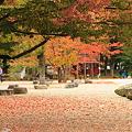 Photos: 霞城公園の紅葉