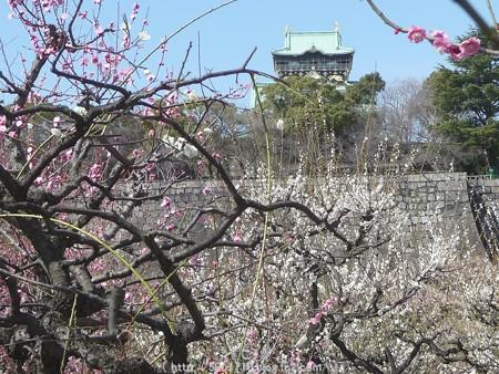 140308-大阪城梅林 (41)
