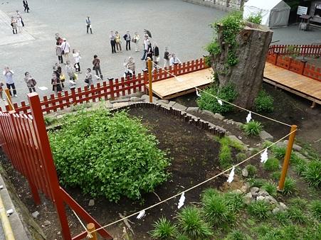 100615-八幡さま (16)
