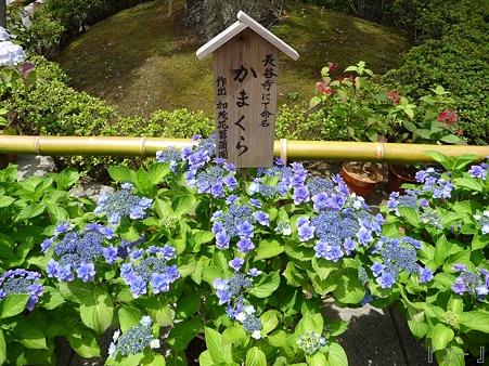 110624-長谷寺 下境内 (11)