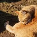 Photos: のら猫3