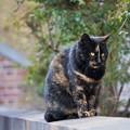 Photos: のら猫5