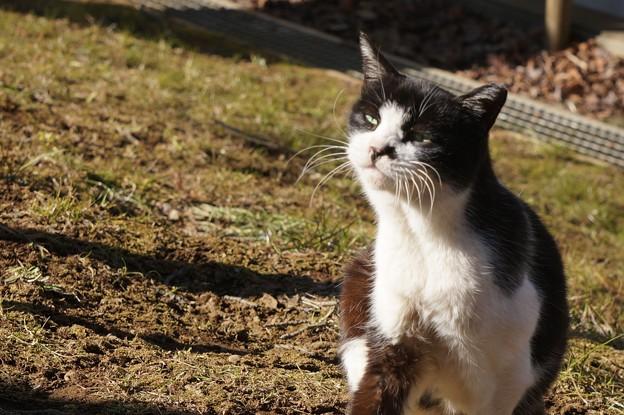 白黒のら猫2