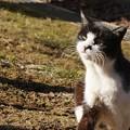 Photos: 白黒のら猫2