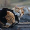 Photos: 河川敷の猫