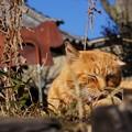 Photos: 日向ぼっこ猫